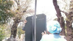 多磨霊園で桜の花の下で工事