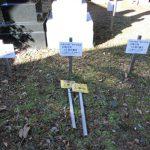 東京都台東区谷中霊園の墓地